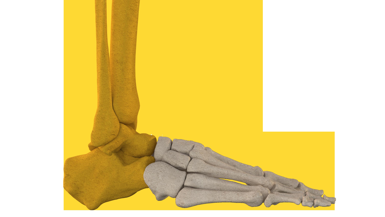 pieds moitié